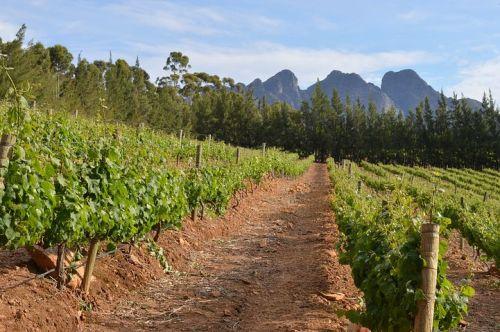 vineyard-716443__480